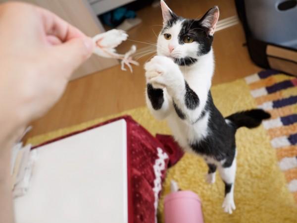 150530cat01 600x450 - 本日の美人猫vol.136