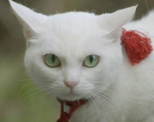 150607nekozamurai02 600x474 - 映画版『猫侍』の続編は、南の島へ。さりげなく黒猫も登場