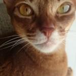 本日の美人猫vol.140