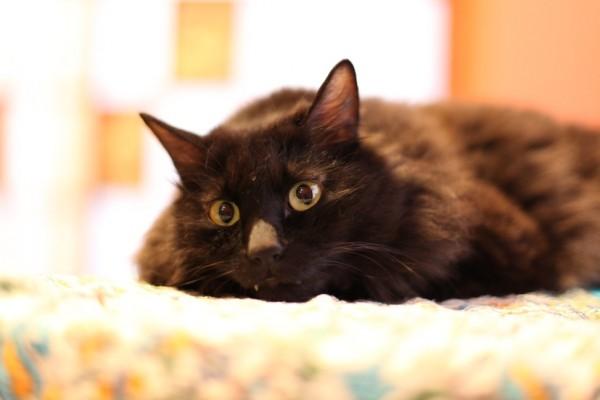 150617 IMG 3453 600x400 - 人生を共にする猫と出会える、保護猫カフェ「ネコリパブリック東京」訪問記