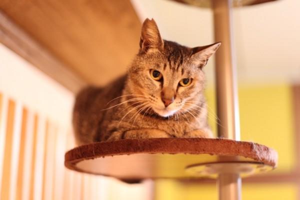 150617 IMG 3485 600x400 - 人生を共にする猫と出会える、保護猫カフェ「ネコリパブリック東京」訪問記