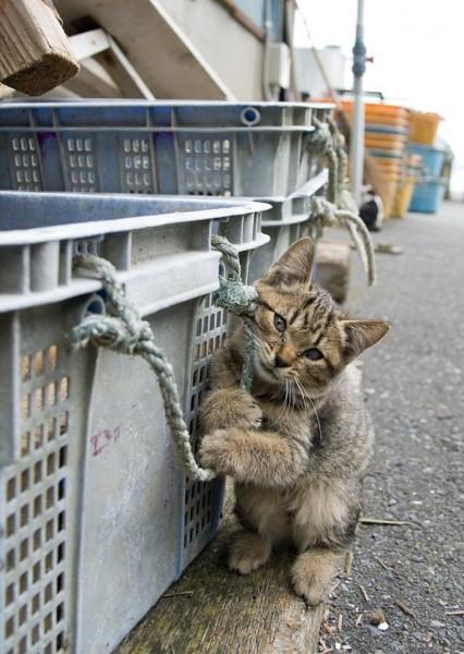 150626tashirojima 426x600 - 夏の週末に猫島へ。月1回の田代島ツアー、絶賛参加者募集中