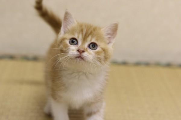 150715DVD04 600x400 - 「猫侍」スピンオフDVD第二弾、猫三昧のDVDが8月20日に発売