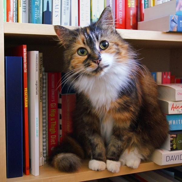 150715catphoto 600x600 - 『世界で一番美しい猫の図鑑』の写真展が7/27〜開催。舶来猫ベッドの展示販売も