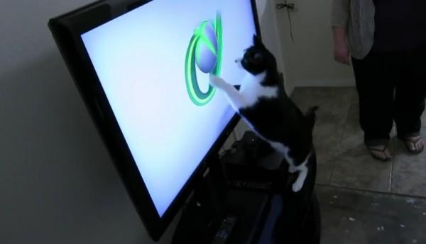 150720catxbox 600x344 - 電源着いたら走り出す、XBOX起動時のあの球狙う黒白猫