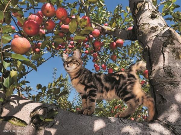 150723tsurugacat02 600x449 - ヒカリエで津軽の猫の写真展、「ふるさとのねこ」の四季の表情。猫写真持参で入場料2割引に
