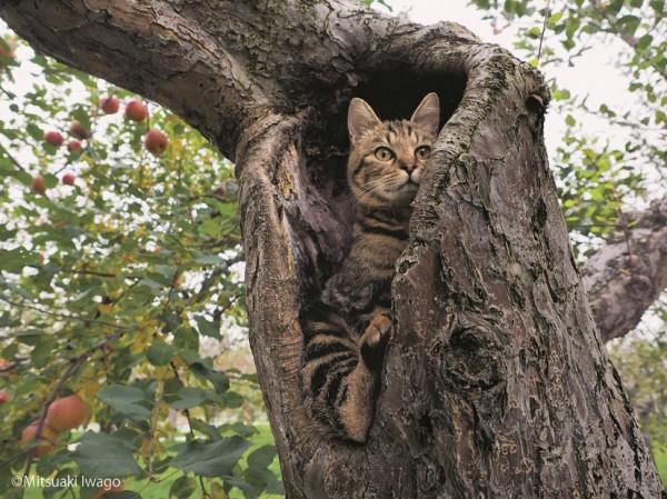 150723tsurugacat04 600x449 - ヒカリエで津軽の猫の写真展、「ふるさとのねこ」の四季の表情。猫写真持参で入場料2割引に