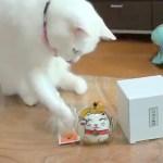 白猫の前脚遊び軽やかに、猫江戸風鈴危機一髪