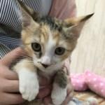 ご縁で子猫と結ばれる「仔猫祭り」が鎌倉で。8月1日から