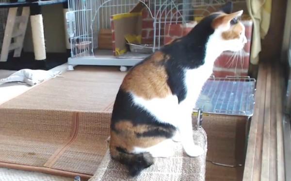 150828catStreaming 600x373 - 日なたに寝転ぶ猫を眺める、猫部屋の定点観測配信中