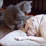 犬に起きてと迫る猫、手出し腹見せ最後は添い寝