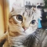本日の美人猫vol.156