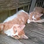湖泳いだ子猫のその後、2匹仲良く里親の家へ