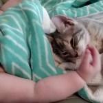 縦列添い寝の赤子と子猫、迷わすかわいさ主役はどちら