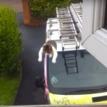 脚立の先から猫ジャンピング、屋根から窓へ見事に決める