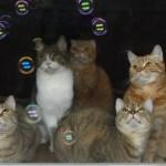 初めて目にするシャボンの球に、目を丸くして眺む猫たち