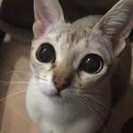本日の美人猫vol.159