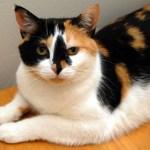 本日の美人猫vol.160