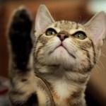 スター・ウォーズのパロディ動画、猫がフォースを持ったなら