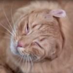 いわゆるひとつの猫ドリル、高速度撮影するとこうなる
