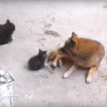 猫の母さん心の洗濯、犬へ子守をお願いし