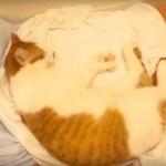 熟睡の茶白の猫も覚醒す、あの三文字の言葉とは