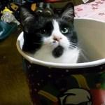 今年も恒例猫バーレル、まるで温泉ドラム缶風呂