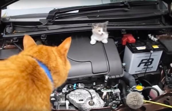 151227EngineRoomcat 600x390 - エンジンルームの三毛猫救出、茶猫の声に誘われて