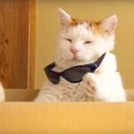 片方の猫手で外すサングラス、不敵に笑う左の口角