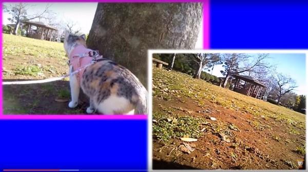160119EYENIMAL 600x335 - 猫の目線のカメラ撮影、人の視線と比較しながら