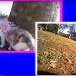 猫の目線のカメラ撮影、人の視線と比較しながら