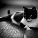 本日の美人猫vol.174