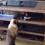 DVDの捨て身攻撃、猫は慌てて退却し
