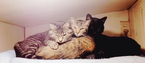 160227Readyfor03 - 猫を助けて利用者みんながほっこりと。旅館の庭を「猫庭」にするプロジェクト
