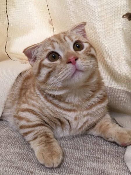 160306cat 450x600 - 本日の美人猫vol.176