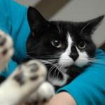 """猫の日本史:猫はどうして""""かき抱かれ""""たのか"""