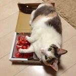 自らの血で猫を救った、「供血猫」ばた子の物語