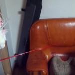釣り竿操る太公望、狙うは大物三毛の猫