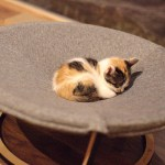 支援のおかげで猫もスヤスヤ、てしま旅館の「猫庭」完成