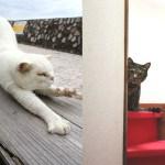 猫とアートの関係を大家の絵画でひもとく講座、矢来町で開催