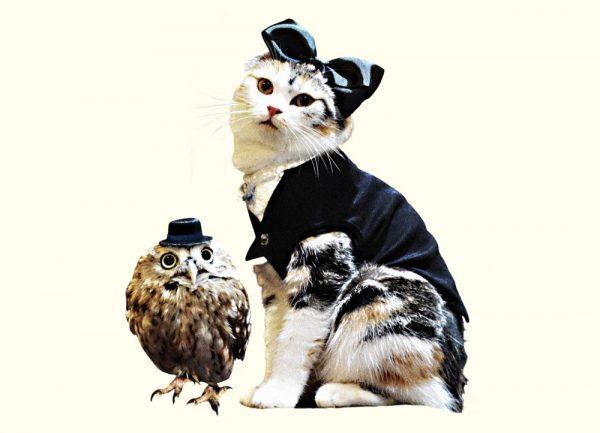 160626nyancla 600x433 - 猫が歌ったクラシック、6年ぶりに新譜登場