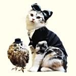 猫が歌ったクラシック、6年ぶりに新譜登場