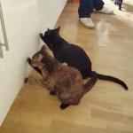 ご飯のありかを悟る猫、開かぬと分かると即解散