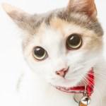 本日の美人猫vol.201