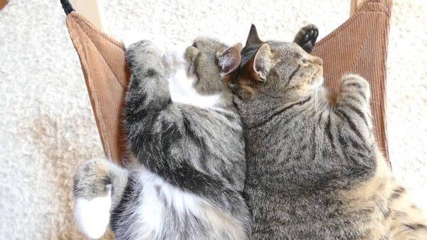 160823hammockcats