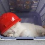優勝の余韻に微睡む赤ヘル猫、四半世紀の万感込めて