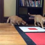追いかけて球を探して盲目猫、獲物はここよと猫手のアシスト