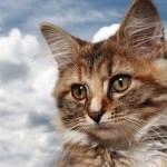 本日の美人猫vol.206