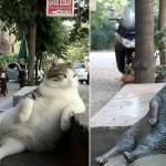 イスタンブールの路上に座るあの猫、銅像になり皆の心に生き続ける