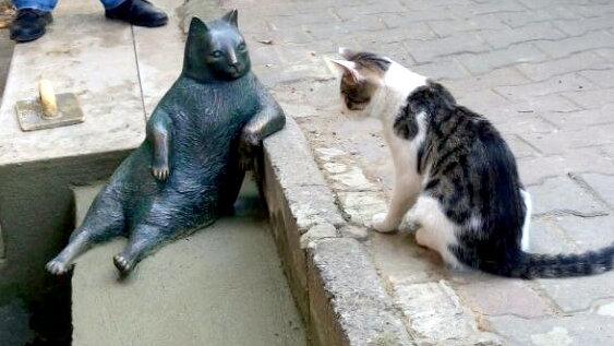 161004Tombli02 - イスタンブールの路上に座るあの猫、銅像になり皆の心に生き続ける